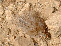 Bagworm Moth Wikipedia
