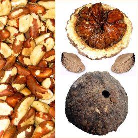 Owoce Orzech brazylijski