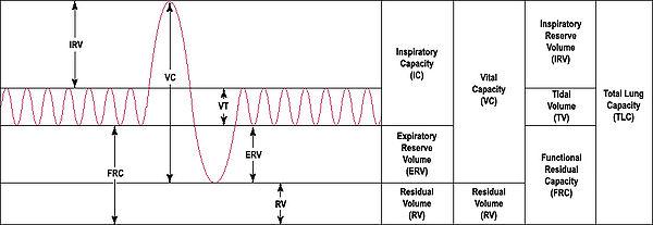 Spirometry - Wikipedia