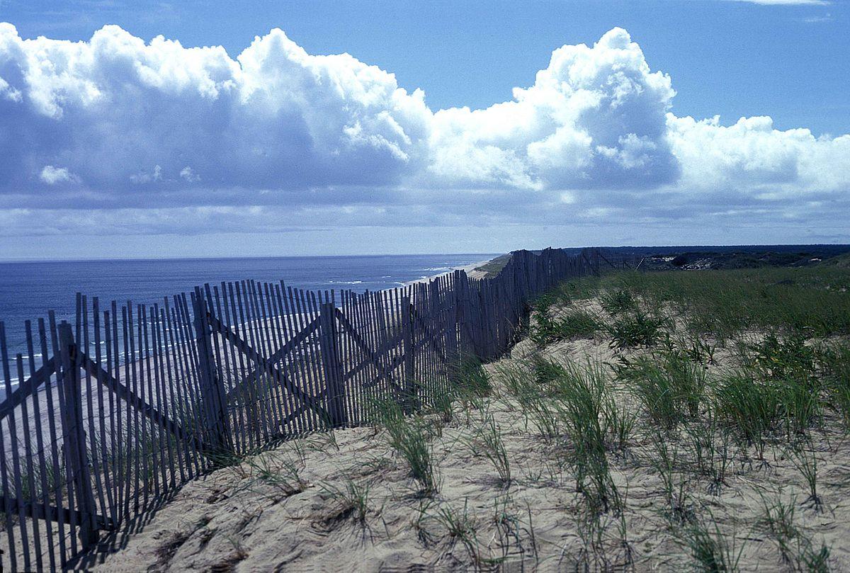 Blue Whale Wallpaper Hd Wellfleet Massachusetts Wikip 233 Dia
