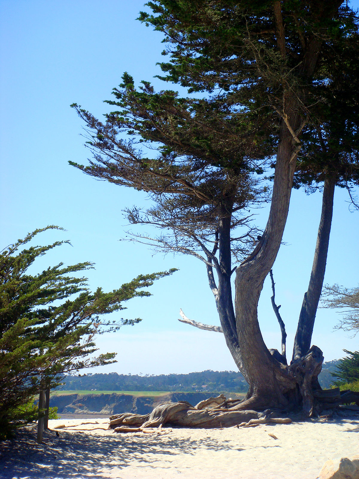 Feeling Wallpaper Hd Carmel By The Sea California Wikipedia