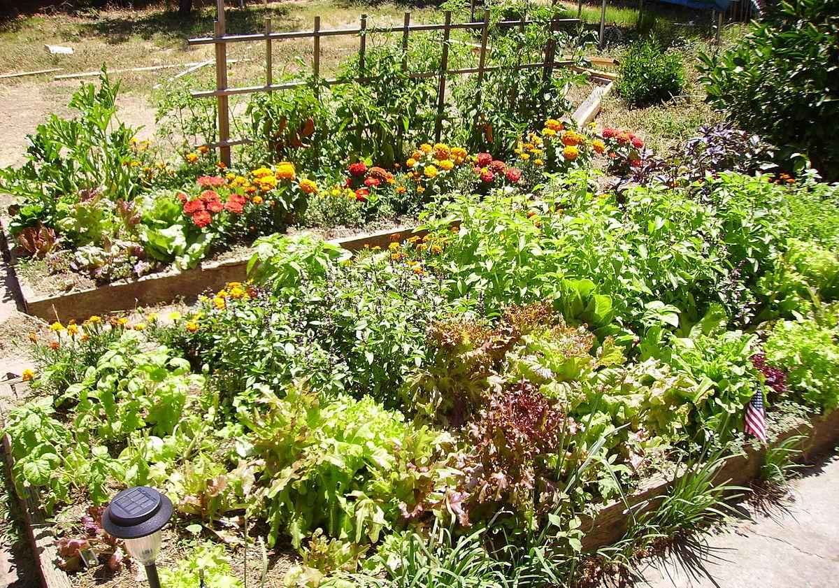 Raised Bed Gardening Wikipedia