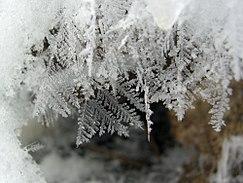 Real Snowflakes Falling Wallpaper Flash Freezing Wikipedia