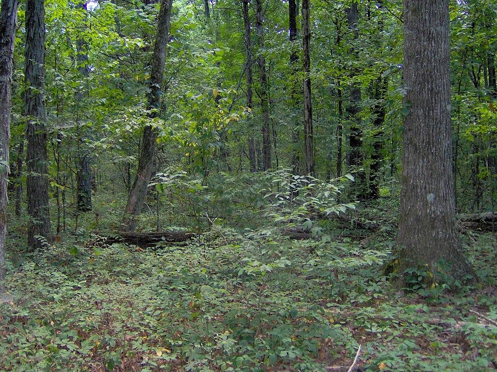 Fileoak Hickory Forest Col Tn1jpg Wikimedia Commons