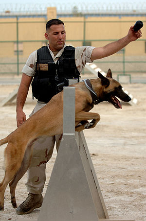 U.S. Naval Security Force K-9 Unit training