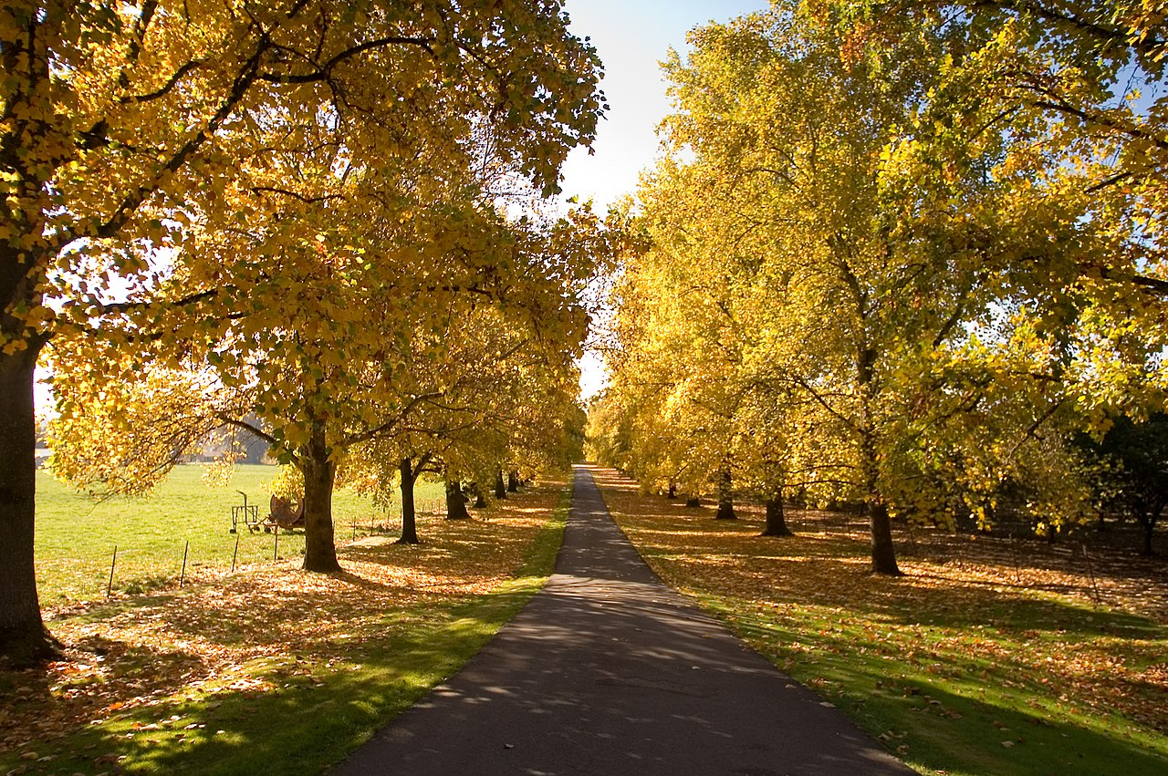 Fall Country Wallpaper File Autumn Driveway In Newberg Oregon Jpg Wikimedia