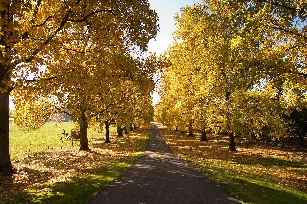 Leaves Fall Desktop Wallpaper File Autumn Driveway In Newberg Oregon Jpg Wikimedia