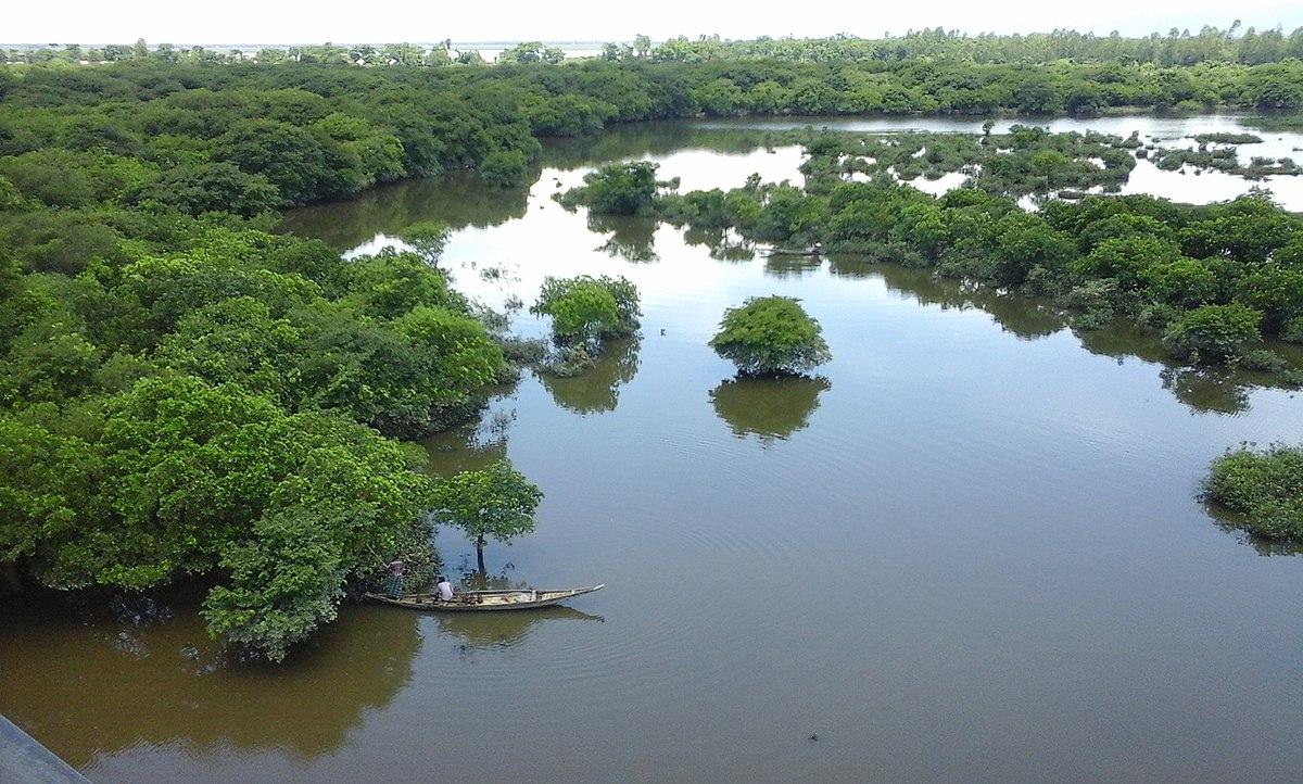 Wetland Wikipedia