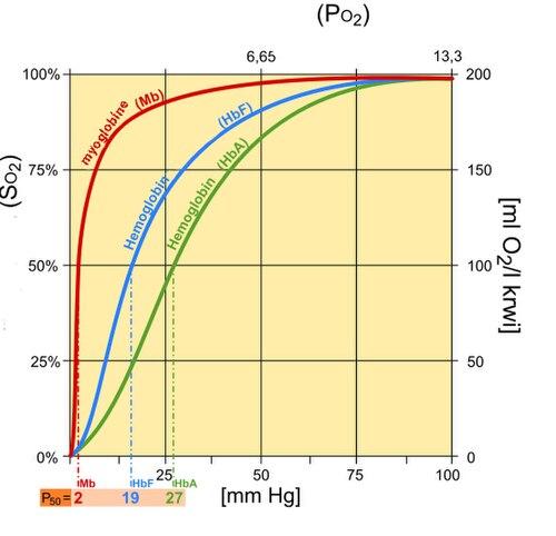 Oxygen\u2013hemoglobin dissociation curve - Wikiwand
