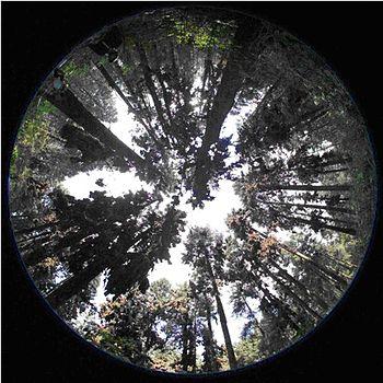 High Resolution Wallpaper Fall Hemispherical Photography Wikipedia