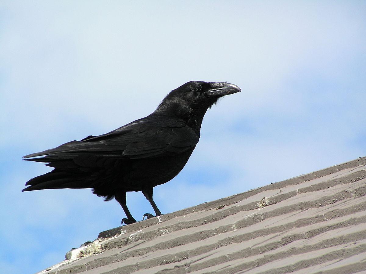 Fall Bird Wallpaper ά ί