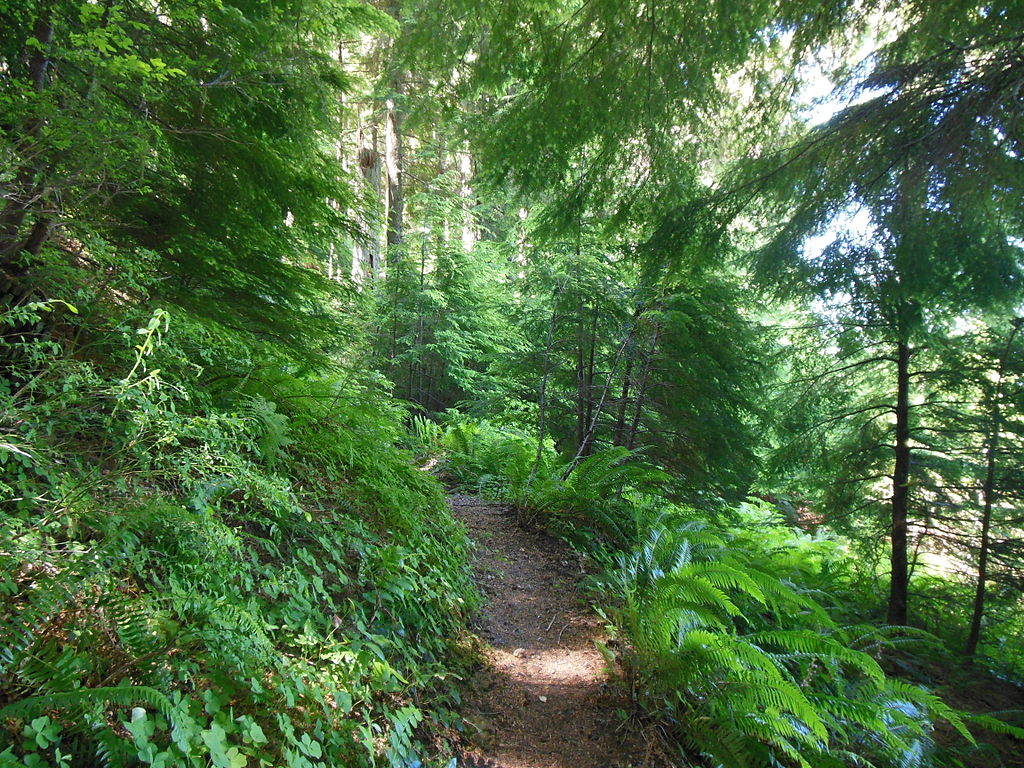 Free Fall Bc Nature Wallpaper File Forest Trail Fern Hemlock Jpg Wikimedia Commons