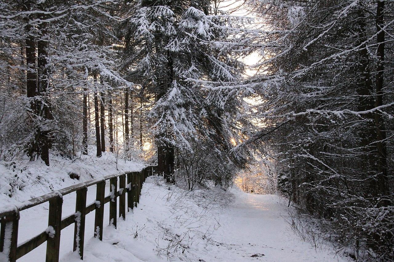 Google Wallpaper Hd File Winter Path 3258772986 Jpg Wikimedia Commons