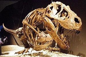 Tyrannosaurus ティラノサウルス