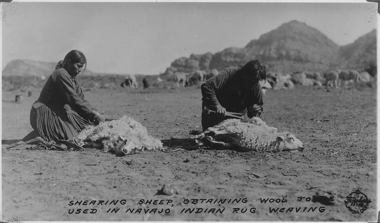 Bureau Long File:navajos Shearing Their Sheep. Southern Navajo Agency
