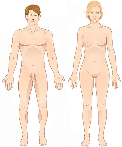 FileAnatomical positionjpg - Wikimedia Commons - anatomical position
