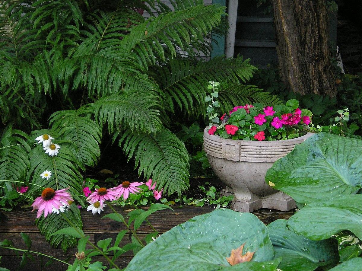 Shade Garden Wikipedia