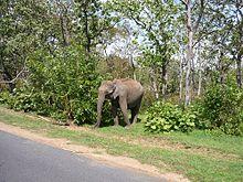 Amazing Animal Wallpapers Bandipur National Park Wikipedia