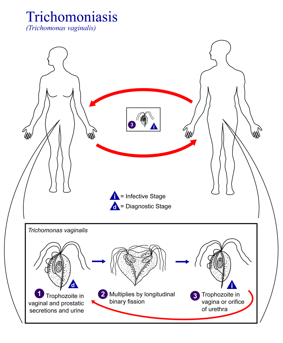 hiv and the body diagram