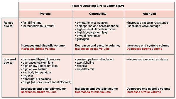 Stroke volume - Wikipedia