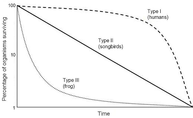 Survivorship curve - Wikiwand
