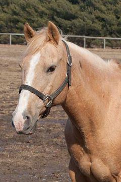 horse pucky