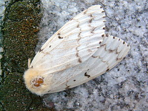 Wisconsin Gypsy Moth Spraying Update, 7/8/13