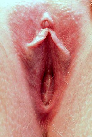 deer vagina