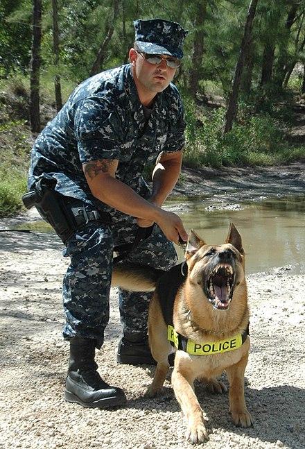 Master-at-arms (United States Navy) - Wikiwand - us navy master at arms