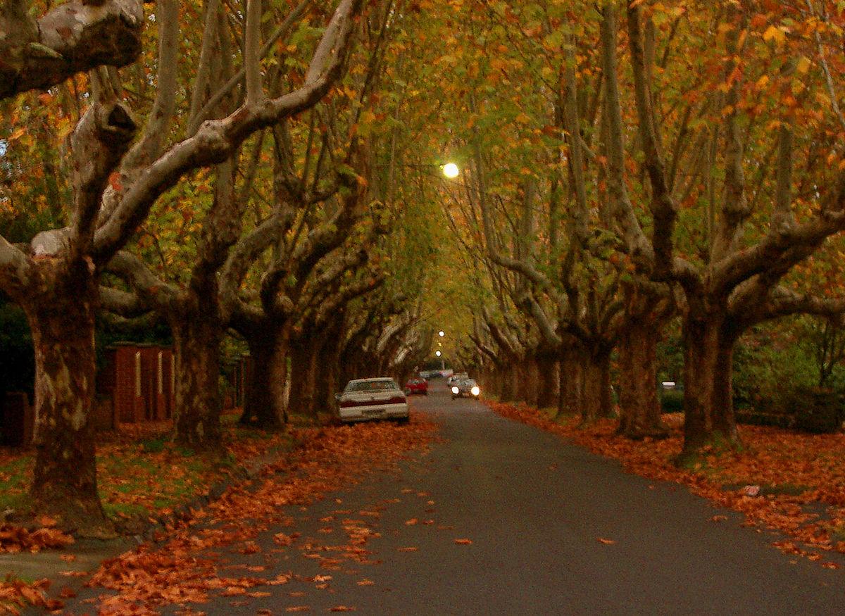 One Tree Hill Wallpaper Quotes Canterbury Victoria Wikipedia