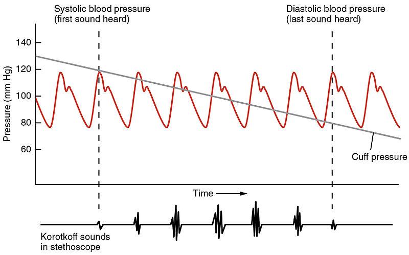 File2111 Blood Pressure Graphjpg - Wikipedia