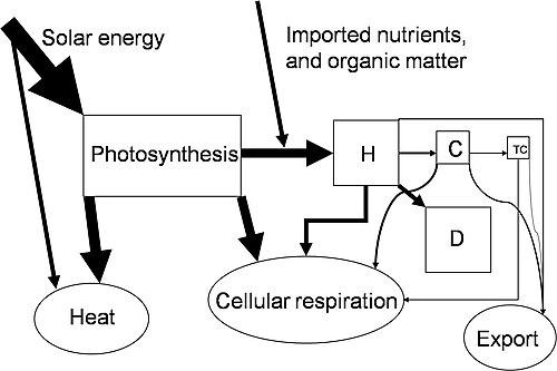 energy chemical energy energy flow diagrams