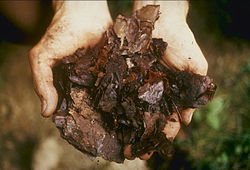 Bahan Organik Yang Optimal Untuk Pembuatan Kompos Atau Pupuk Organik