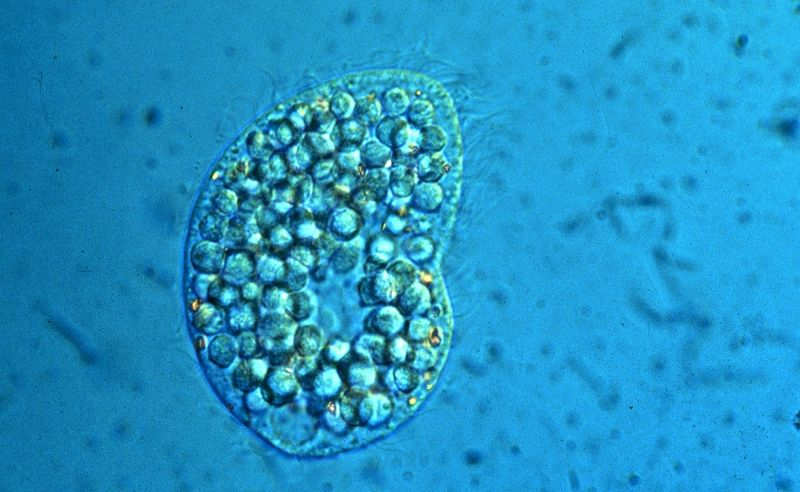 Examples Of Archaebacteria Animalia - Six Kingdoms - MTM