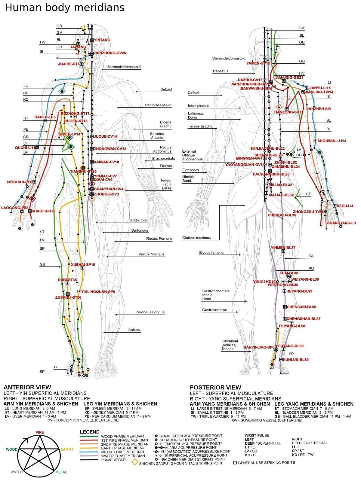 reflexology pdf