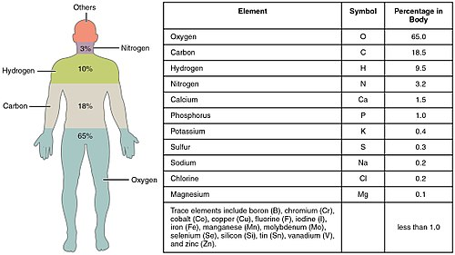 Composition of the human body - Wikipedia
