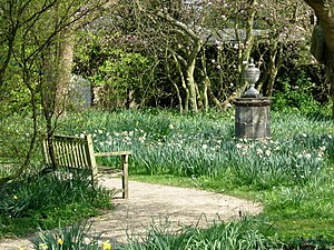 Nymans Garden-Ode to a Grecian Urn. A daffodil...
