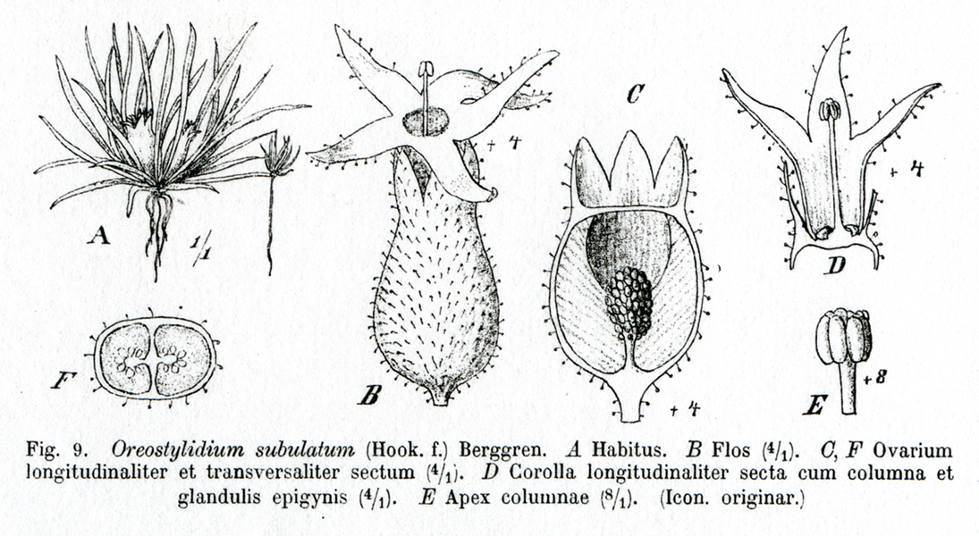 botanical encyclopedia diagram