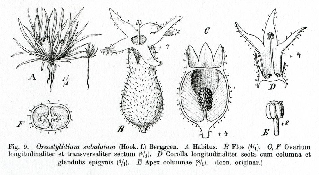 botanical encyclopedia diagram