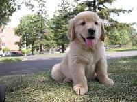 Puppy-sam