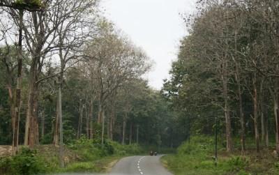 Pitoong Gambar Gambar Hutan