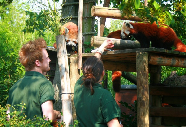 How to become a Zookeeper - Paradise Wildlife Park