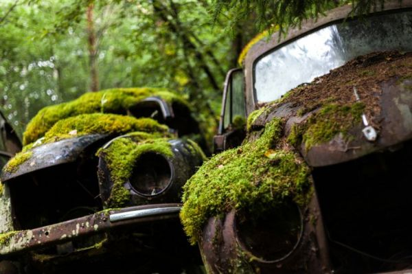 Wallpaper American Muscle Car A Classic Car Graveyard In Sweden Neatorama