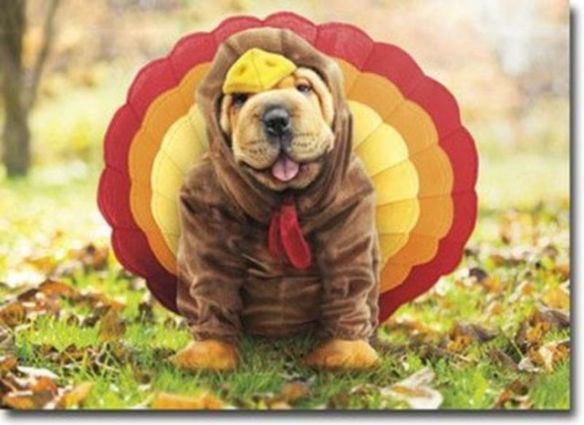 Thanksgiving Dog Wishes You A Happy Turkey Day