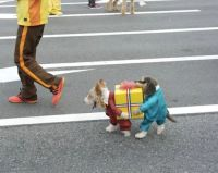 Two Dogs Carrying A Present Pet Costume - Neatorama