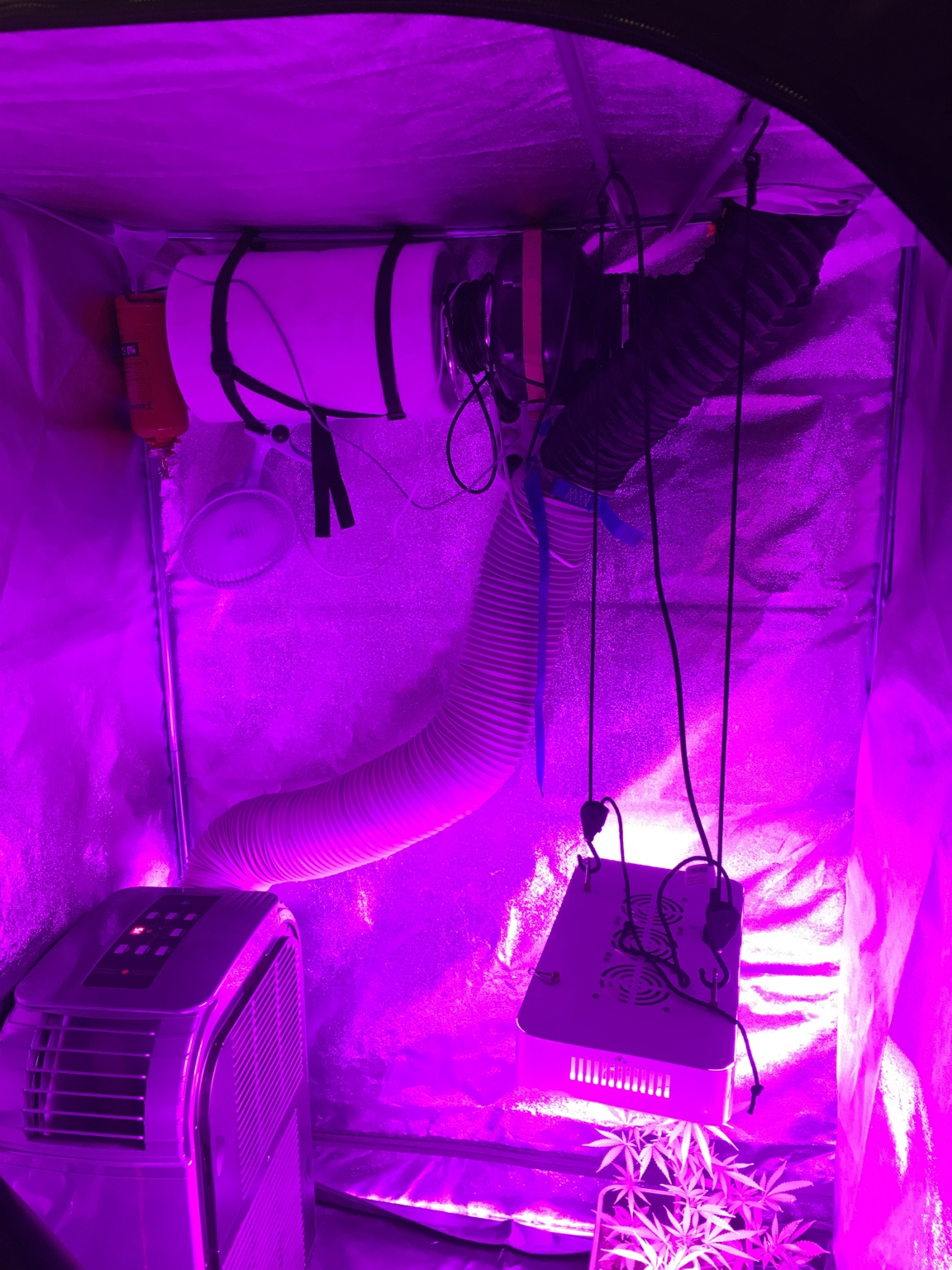 Cannabis Kweken Led Verlichting Planten Kweken Met Led Verlichting Latest With Planten