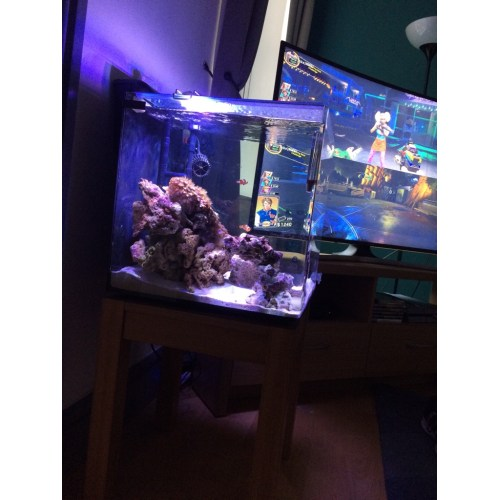 Medium Crop Of Aquarium Safe Paint