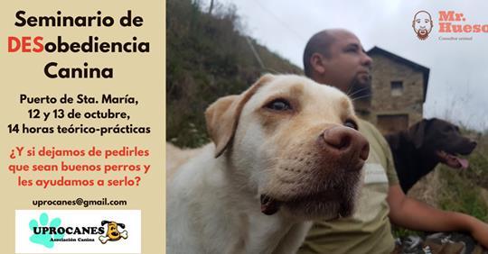 SEMINARIO DE DESOBEDIENCIA CANINA CON RAUL HUESO