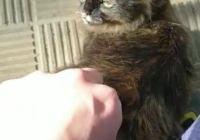 Uprocanes y Gatos de El Puerto piden más transparencia en el Servicio de Recogida de perros y gatos