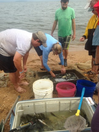 Identifying fish after seining the shoreline